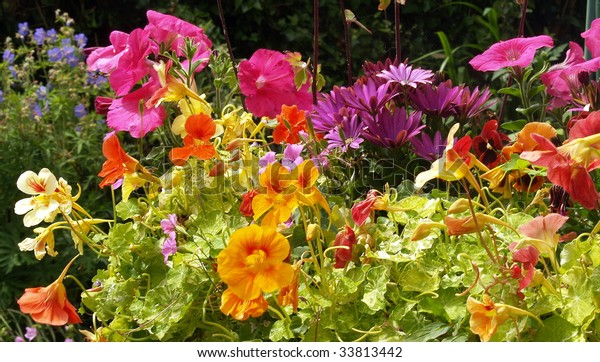 We are the flowers of one garden. Multiple varieties of pansies grow in a Victoria flower box