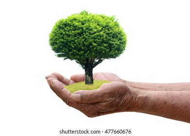 We love the world of ideas, man planted a tree in the hands.White background