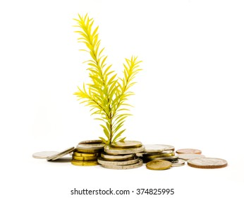wealth grow up  isolated on white background