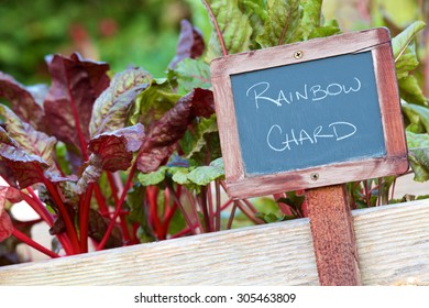Weathered chalk board sign identifying the Rainbow Chard variety of vegetable in a small garden.