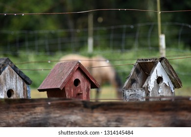 Weathered country bird houses in the rain with horse in background.