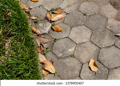 Weathered gray hexagonal pavers, leaf litter and liriope, in need of cleaning, horizontal aspect
