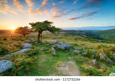 Weathered Hawthorn trees at Combestone Tor on Dartmoor National Park in Devon