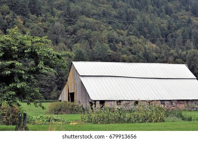 Weathered old barn stands against tree-covered mountain with row of corn in foreground.