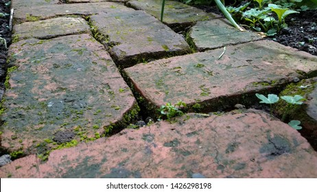 Weathered and old looking red brick garden path