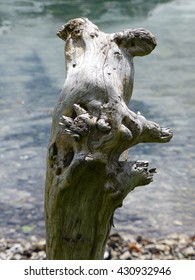 weathered piece of driftwood seen against clear water of mountain lake and shingle shore