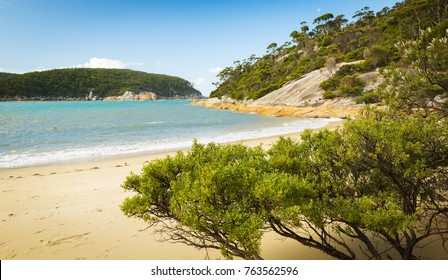 Weathered trees line beach at Refuge Cove, Wilsons Promontory National Park, Victoria, Australia