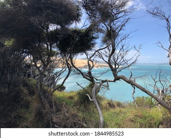 Weathered trees and rough coastal landscape in  front of blue and turquoise ocean