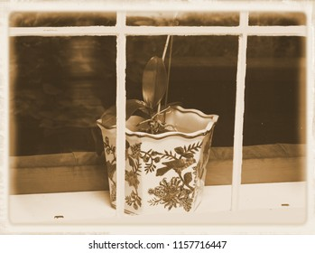 Weathered window frame with planter showing through window
