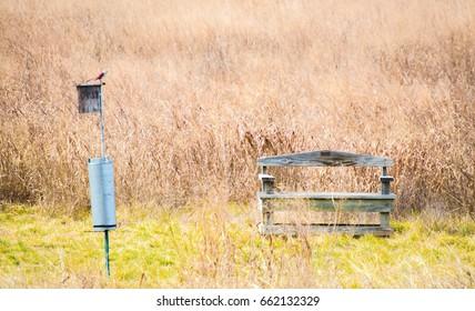 weathered wooden bench with bird feeder