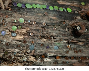 weathered wooden board with banged in multicolored steel nails and brads