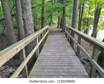 Weathered wooden footbridge, framed by tall trees, spanning a ravine in a wooded area in the upper Midwest. Exposed soil, stones, roots, dead leaves, fallen trees, foliage & a path into the distance.