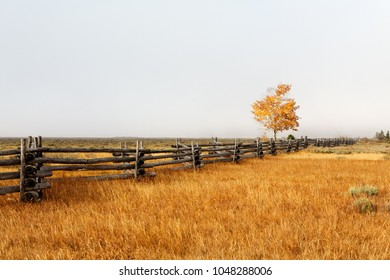 Weathered zig-zag log fence and single tree with fall colors and foggy background on ranch in Sawtooth Mountains in Idaho state