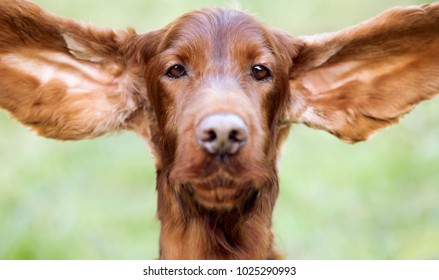 Web banner of a funny cute dog as fluttering his ears