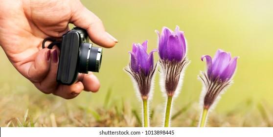 Web banner of purple spring flower macro photography
