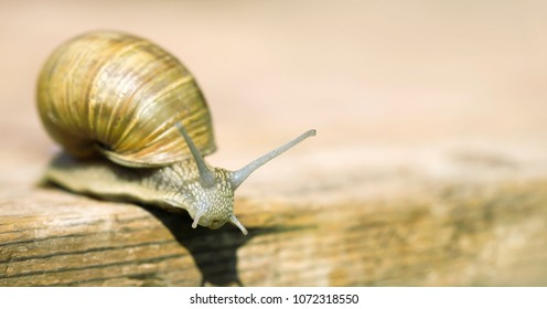 Web banner of a slow snail with blank, copy space