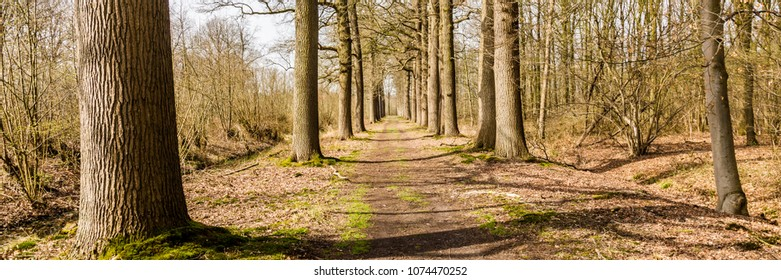 Web banner of a trail in a early spring sunny forest