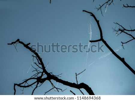 Web Flutter Evening Sky Stock Photo (Edit Now) 1148694368 - Shutterstock