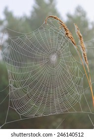 web on a blade of grass
