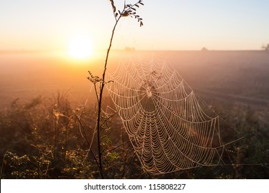 Web of a spider against sunrise in the field covered fogs