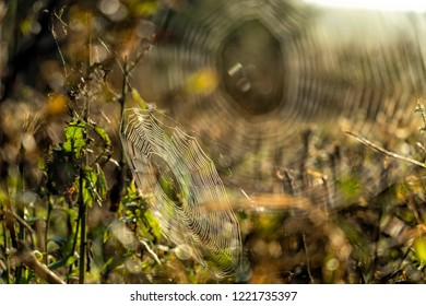 Web of a spider against sunrise in the field covered by fog/mist. Spider web on a meadow at sunrise.