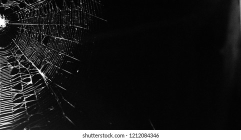 web,background for Halloween
