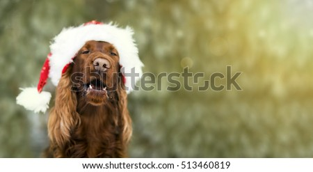website banner of a funny christmas dog with santa claus hat