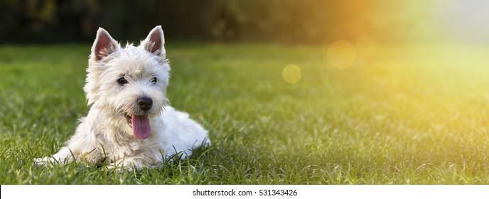 Website-Banner eines glücklichen Hundewelpen als im Gras liegend