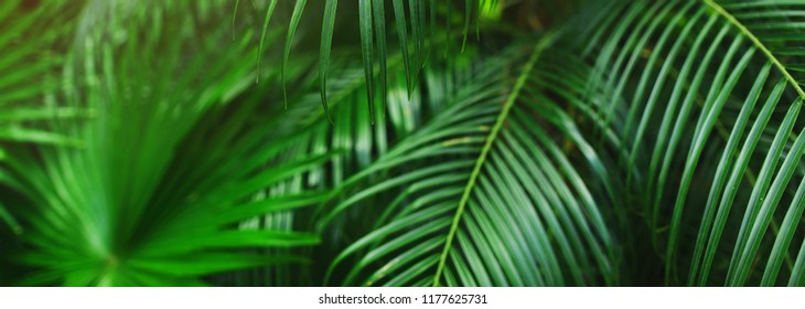 Tropical Header Images Stock Photos Vectors Shutterstock Summer trendy tropical palm leaves header template with twinkling fireflies. https www shutterstock com image photo website banner tropical palm leaves foliage 1177625731