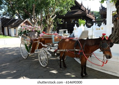 Wedding carriage with little horse