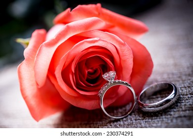 Wedding concept with roses and rings,Red fresh rose and gold wedding rings on white background. Space for your text,Set of Wedding Rings in Rose