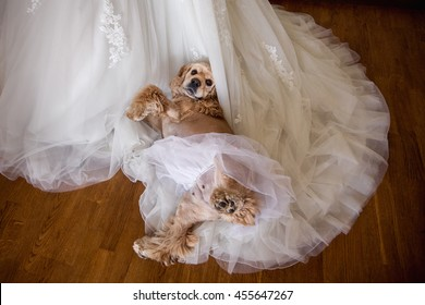 Wedding Dog Images, Stock Photos & Vectors | Shutterstock