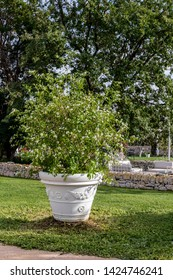 Wedding in a farm in Puglia, region of southern Italy. A large garden vase on the lawn, on the background of trees and illuminated by daylight.