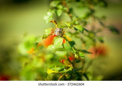 Wedding items, bush, foliage, roses, rings, photo, summer, sunny