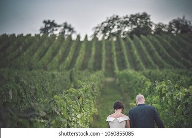 Wedding in the nature. Couple walking the vineyard. Love concept, happiness, vintage wedding day.