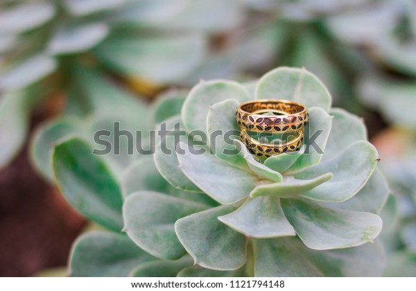 wedding on the succulent