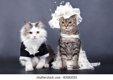 Cat wedding images stock photos vectors shutterstock wedding portrait a cat junglespirit Images