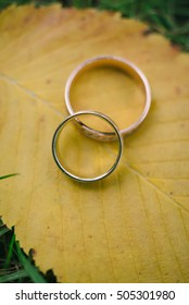 wedding rings with autumn leaves