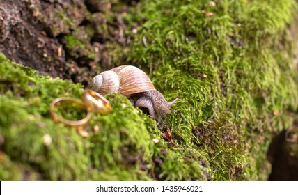 wedding rings newlyweds in the nature, lie on the moss next to the snail.