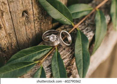 Wedding rings on a beautiful leaf branch and vintage wooden texture background.