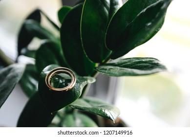 Wedding rings on a green leaf