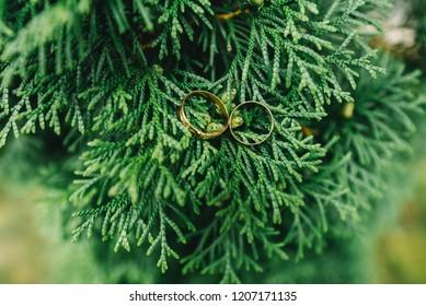 Wedding rings on green leaves of thuja