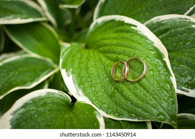 Wedding rings on large green leaves