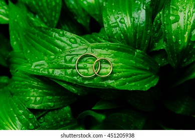 Wedding rings on the leaves with drops of dew