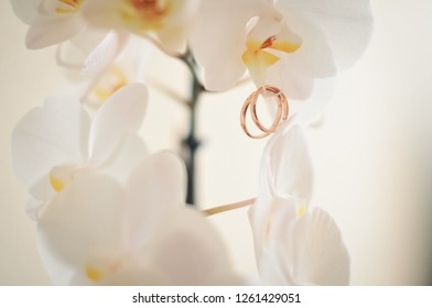 wedding rings on orchid
