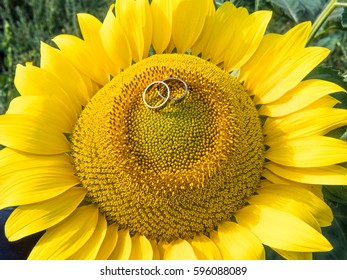 Wedding rings on the sunflower