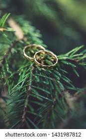 wedding rings on tree branch