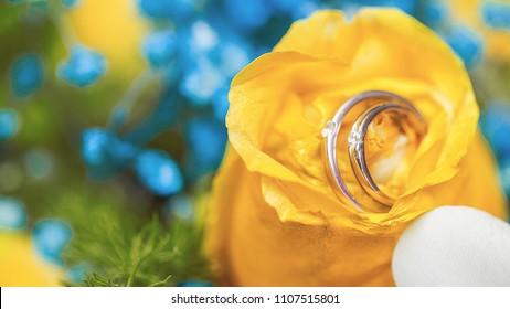 wedding, wedding rings on a yellow flower