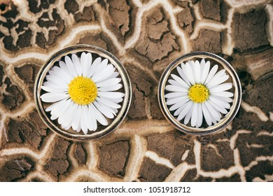 Wedding rings placed on a tree bark and daisy flower blossom inside.