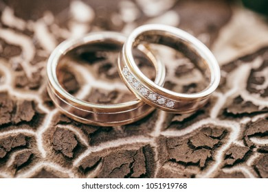 Wedding rings placed on a tree bark.